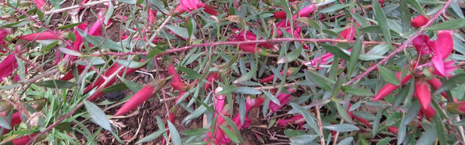pink_flower_header